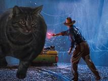 Sở hữu thân hình đô vật, 'boss' mèo cơ bắp gây sốt trên MXH