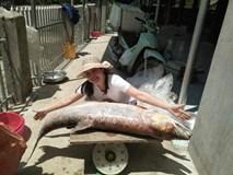 Cá măng sông Đà 35 kg: Hàng hiếm, chỉ dành cho đại gia