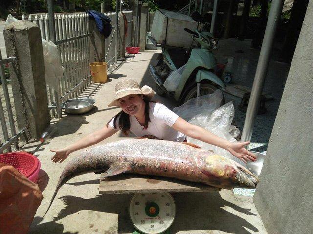 Cá măng sông Đà 35 kg: Hàng hiếm, chỉ dành cho đại gia-2