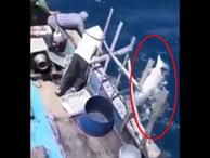 Clip ngư dân phóng lao giết cá heo gây phẫn nộ
