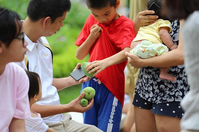 Chuyện lạ Hà Thành: Dân phố kéo ra vỉa hè mở hội hái xoài-2