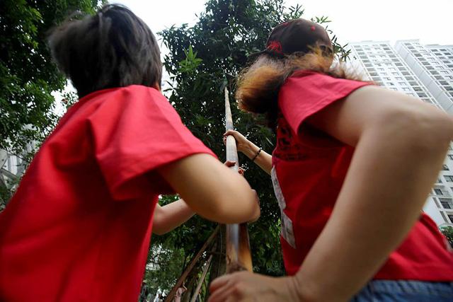 Chuyện lạ Hà Thành: Dân phố kéo ra vỉa hè mở hội hái xoài-4