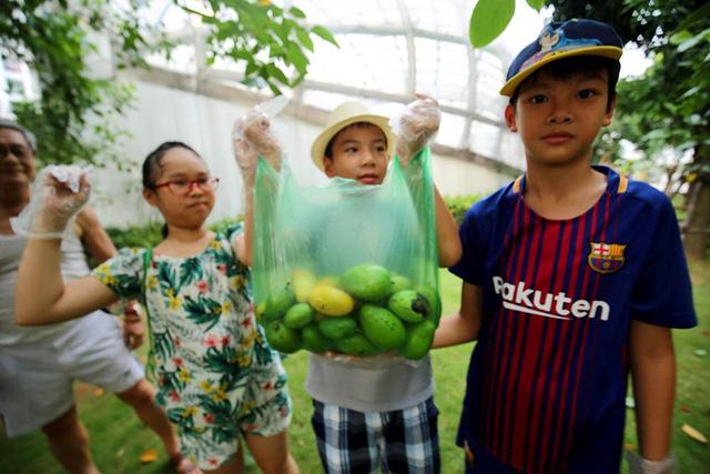 Chuyện lạ Hà Thành: Dân phố kéo ra vỉa hè mở hội hái xoài-9