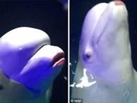 Lấy son ra đánh cho cá voi với lý do 'cho nó xinh', cô gái hứng chịu cả tấn gạch đá từ cộng đồng mạng quốc tế