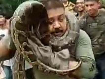 Trăn khổng lồ dài 10 mét siết cổ người đàn ông Ấn Độ