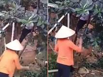 Phương pháp để mít phải ra quả áp dụng ở Việt Nam
