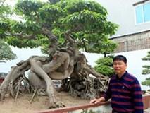 Khối tài sản vô đối của Toàn đôla đại gia Phú Thọ