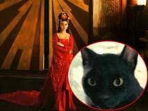 Võ Tắc Thiên: Không sợ trời, không sợ đất nhưng lại khiếp đảm những con mèo cho đến tận lúc chết