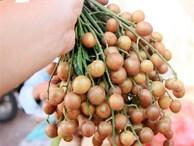 Chuyên gia Đông y tiết lộ: Thứ 'quả vàng' mùa hè là vị thuốc rất quý nhiều người đang để phí