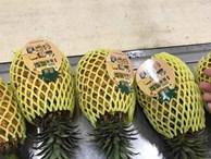 Ham của lạ: Đua nhau mua dứa Đài Loan 'khủng' giá gấp 100 lần dứa Việt