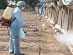 Mẹ và song thai tử vong vì nhiễm cúm A/H1N1-2