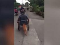 Chó cần mẫn đẩy xe lăn cho cậu chủ khuyết tật khiến dân mạng cảm động