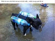 Chú chó đeo phao tự chế và câu chuyện buồn đằng sau khiến nhiều người nghẹn ngào
