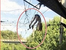Chụp ảnh tự sướng, bé gái rơi xuống đường dây điện cao thế 3.000 volt
