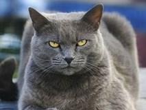 Lời đồn con 'quỷ mèo' ở Nhà Trắng chỉ xuất hiện trước mỗi thảm họa khủng khiếp ở Mỹ