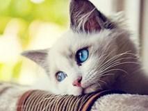 Giải mộng: Nằm mơ thấy mèo báo hiệu điều gì?