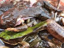 Đặc sản ếch núi 'ngàn năm tráng kiện', có tiền cũng không dễ mua