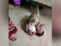 Clip kinh hoàng: Em bé trên mặt nhiều vết bầm tím, bị một con khỉ giật lấy, ghì chặt xuống đất, không cho một ai đến gần