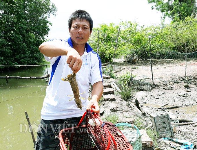 Sự thật tôm tích đắt nhất quả đất ở vùng Đất mũi Việt Nam-1