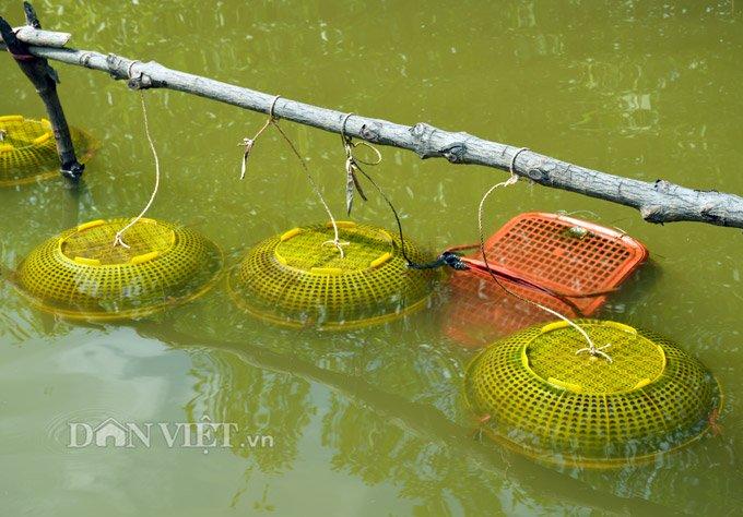 Sự thật tôm tích đắt nhất quả đất ở vùng Đất mũi Việt Nam-3