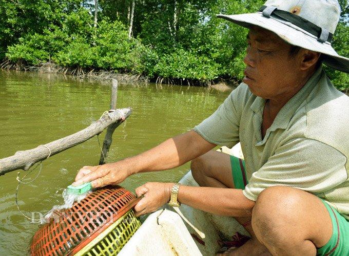 Sự thật tôm tích đắt nhất quả đất ở vùng Đất mũi Việt Nam-5