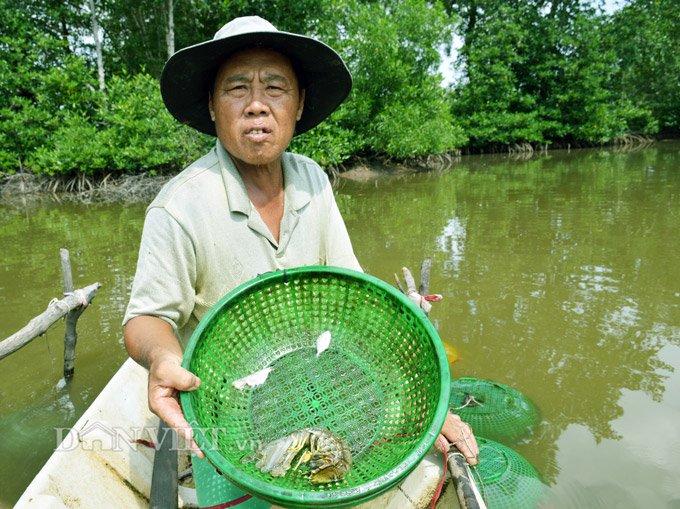 Sự thật tôm tích đắt nhất quả đất ở vùng Đất mũi Việt Nam-8