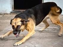2 con chó béc-giê cắn vào chỗ hiểm, đoạt mạng ông chủ 49 tuổi