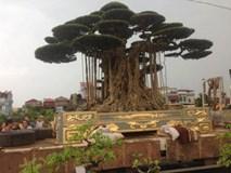 Đại gia Thái Bình: Chậu cây dát vàng, nuôi cây cảnh bạc tỷ