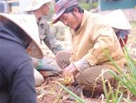 Nông dân khốn khổ vì nông sản Trung Quốc nhái hàng Đà Lạt: '3 tháng trồng khoai không bán được đồng nào, chỉ biết khóc...'