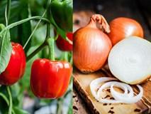 Có những loại rau củ tuyệt đối không nên nấu chín kẻo mất dinh dưỡng vậy mà lâu nay chị em nội trợ toàn làm ngược lại