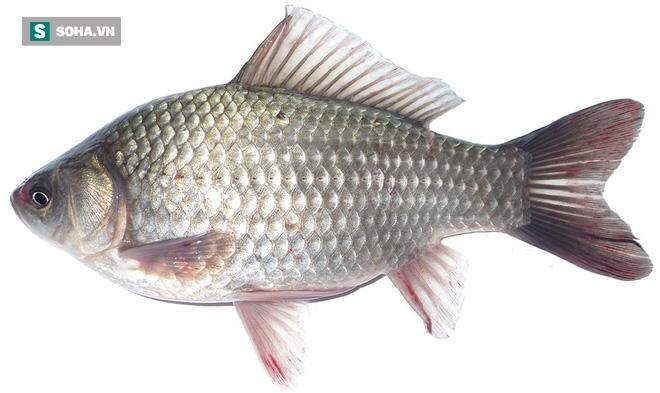 Cá diếc rất ngon và bổ dưỡng, nhưng 4 nhóm người này không nên ăn: Hãy xem có bạn không?-1