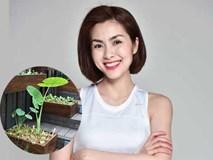 Có ai như Tăng Thanh Hà, ở biệt thự triệu đô vẫn trồng rau sạch trong chậu để ăn?