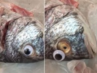 Mua cá tươi về nhà, người phụ nữ phát hoảng khi phát hiện ra chiêu trò chưa từng thấy của gian thương