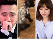 Trấn Thành đòi 'giết' Hari Won vì tự ý mua mèo cưng 3000 USD rồi vô tư cạo sạch lông nhìn phát hãi