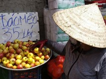 Táo mini Trung Quốc đội lốt 'táo mèo' Hà Giang