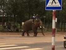 Đắk Lắk: Xuất hiện ông bố đưa con đi học bằng voi