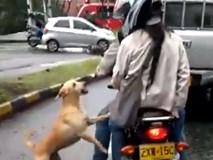 Hình ảnh chú chó tuyệt vọng đuổi theo chủ sau khi bị bỏ rơi khiến nhiều người phải rơi nước mắt
