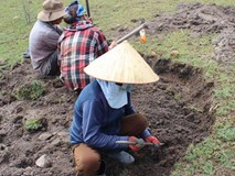 Phú Yên: Đổ xô đi đào loại đá đen lấp lánh dưới đáy hồ thủy điện