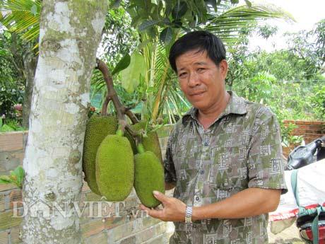 Tự tay lai tạo giống mít ra trái khổng lồ, lời gần 1 tỷ đồng/năm-2