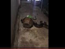 Clip: Tóm gọn trăn khủng bò vào nhà dân lúc nửa đêm ở Bình Dương