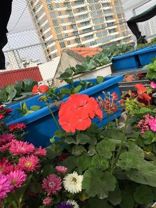 Chỉ 40m² sân thượng, mẹ Hà Nội gây bất ngờ với vườn ngập rau trái, gà, trứng ăn quanh năm-3