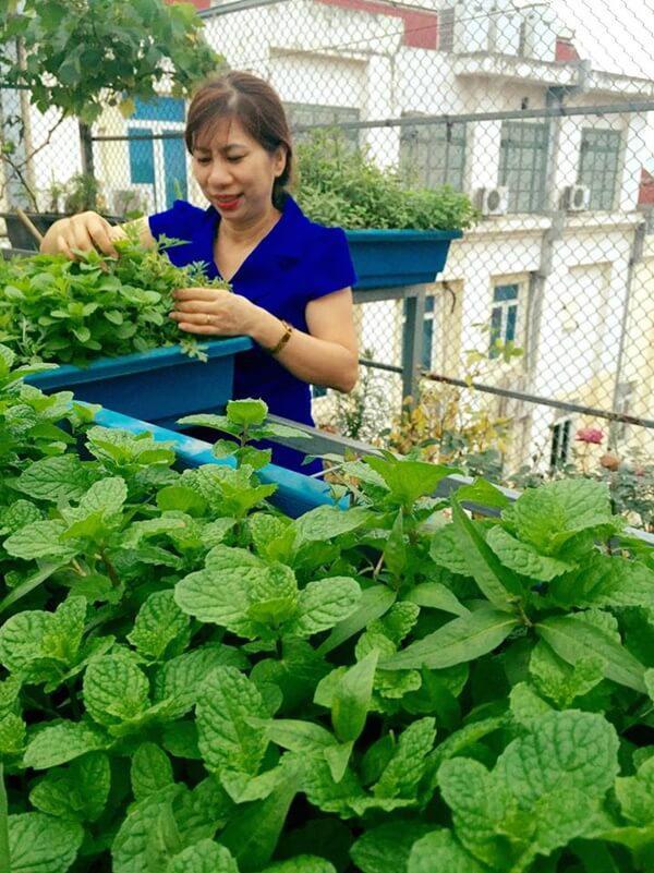 Chỉ 40m² sân thượng, mẹ Hà Nội gây bất ngờ với vườn ngập rau trái, gà, trứng ăn quanh năm-6