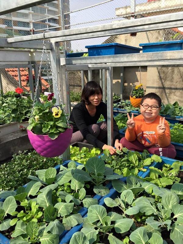 Chỉ 40m² sân thượng, mẹ Hà Nội gây bất ngờ với vườn ngập rau trái, gà, trứng ăn quanh năm-7