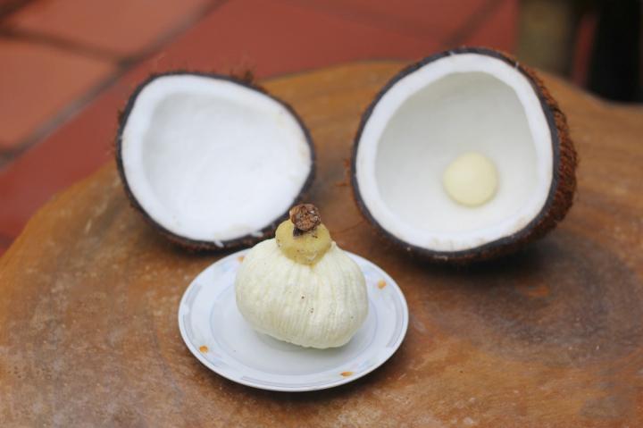 Mộng dừa là gì mà có giá cao gấp 30 lần quả dừa?-1