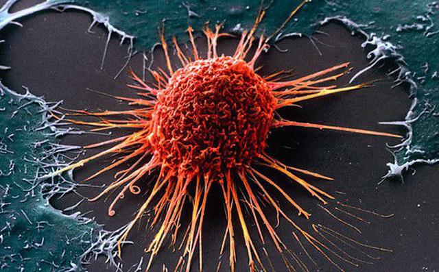 Thiếu vitamin này, cơ thể dễ bị ung thư hơn: Nguồn cung sẵn trong tự nhiên, hãy tận dụng-1