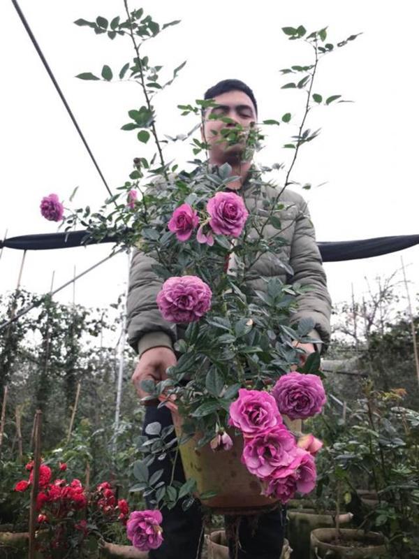 Vườn hồng vài nghìn gốc siêu quý 3000m2 của hot girl 8x Thái Nguyên-12