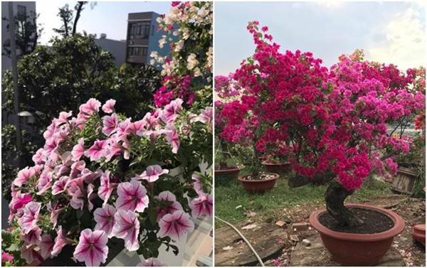 Vườn hồng vài nghìn gốc siêu quý 3000m2 của hot girl 8x Thái Nguyên-9
