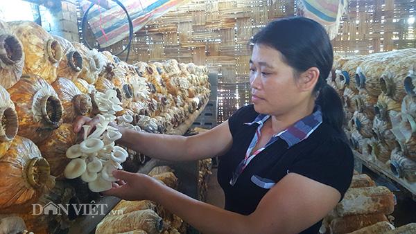 Từ phận làm thuê, gái đảm xứ Lạng thành bà chủ trại nấm khủng-2