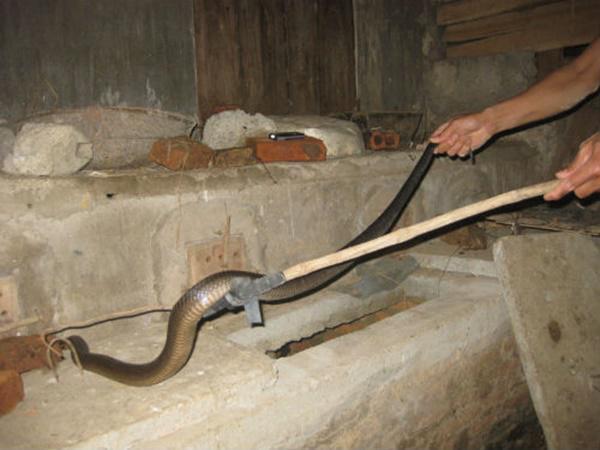 Muốn rắn không bò vào nhà hãy thử những cách này-5
