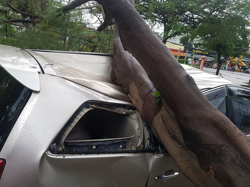 TP.HCM: Xế hộp bị cây xanh đè bẹp dúm trên đường phố, tài xế vội đạp cửa thoát ra ngoài-2